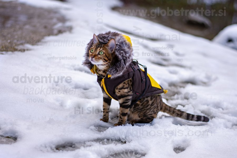Mali leopard na zimskem potepu, Žiga Bobek