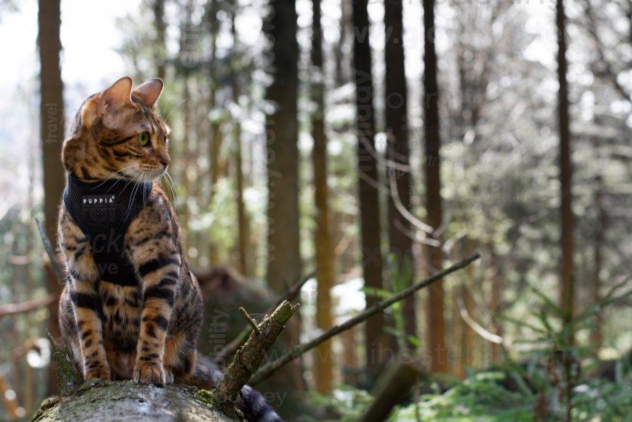 Potepanje po zelenih gozdovih, Žiga Bobek