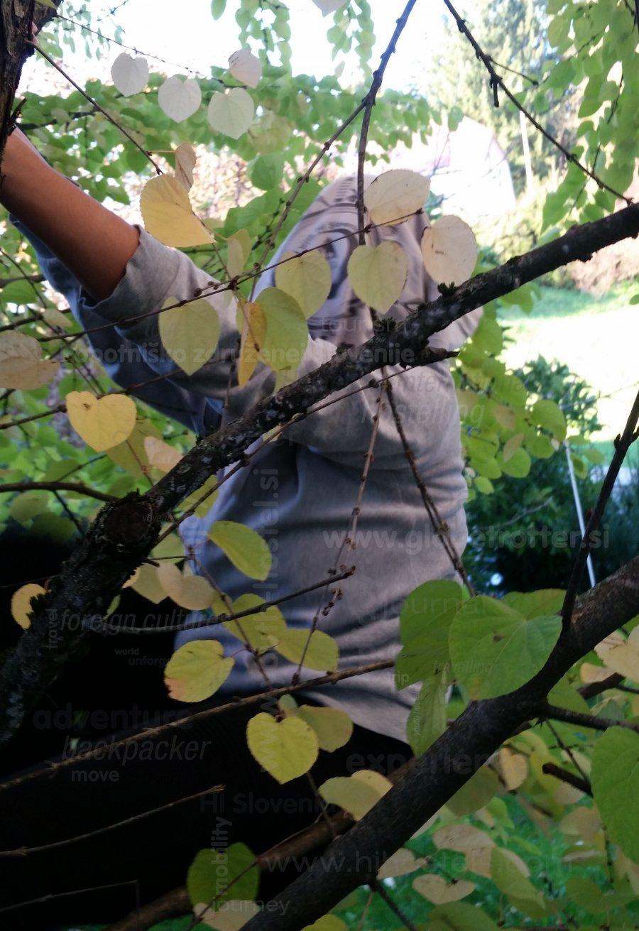 Plezanje na drevo, Alenka Kastelic