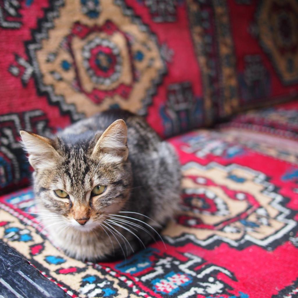 Clara_Mevzelj_Ozaj_-_Istanbul_10.jpg