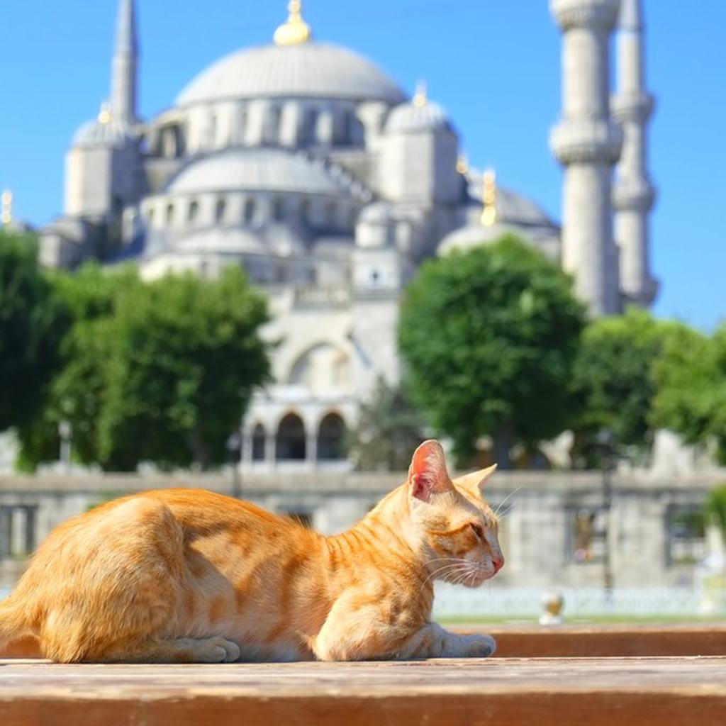 Clara_Mevzelj_Ozaj_-_Istanbul_7.jpg
