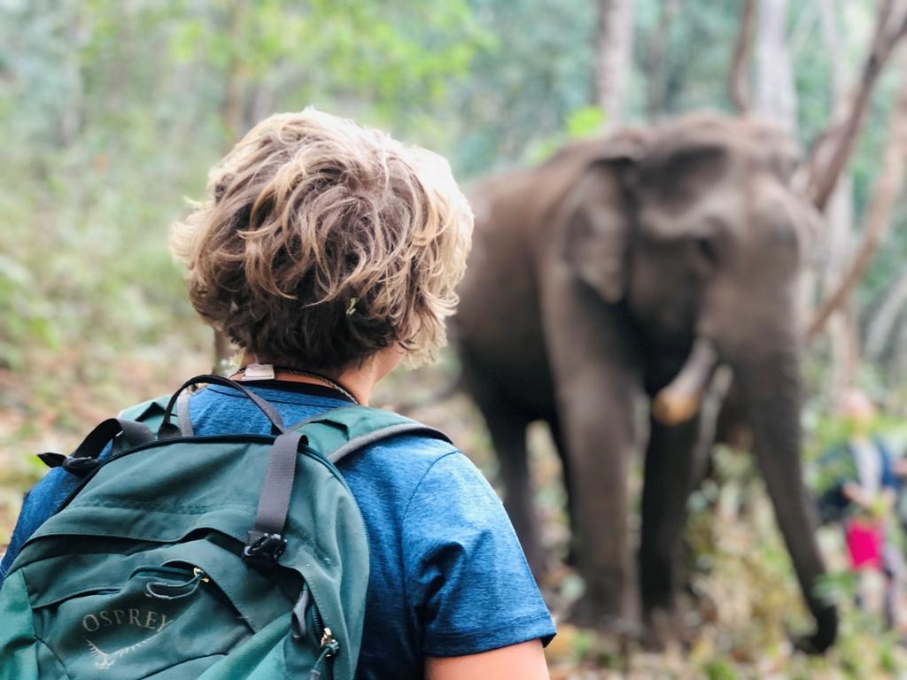 Resevanje_slonov_na_Tajskem_-_Rescue_elephants_in_Thailand_2.jpg